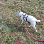 Olivia Straßenhund ProDogRomania