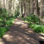 Forstweg Altenhofer Wald