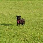 _DSC6816 Cleo rumänischer Straßenhund