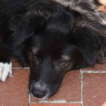 Davina Hund unter Stuhl Promenade Strand Eckernförde