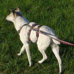 Pflegehund Olivia Hundes suchen ein zuhause ProDogRomania