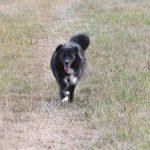 Davina Hund prodogromania