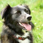 Davina rumänischer Straßenhund