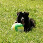 Davina ProDogRomania Hund Ball Volleyball