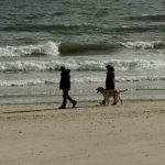 Wanderer mit Hund Nordsee Blavand Strand Dänemark