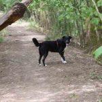 Ivy Straßenhund ProDogRomania