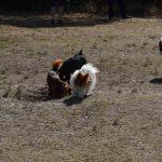 Kleine Hundewiese Großes Meer Bedekaspel
