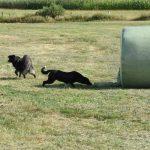 Grasballen Wiese Hund