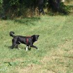Ivy Hund ProDogRomania