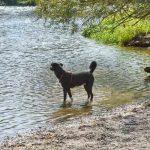 Ivy am Fluss