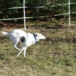 Pflegehund Olivia ProDogRomania e.V.