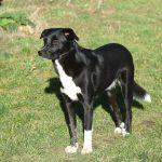 Welpi Ivy ProDogRomania Strassenhund
