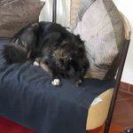 Davina Hunde Couch ProDogRomania