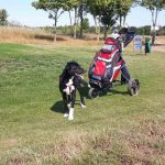 Ivy golf Machern ProDogRomania