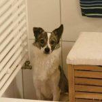 Ophelia Pflegehund ProDogromania e.V.