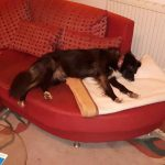 Davina auf der Couch